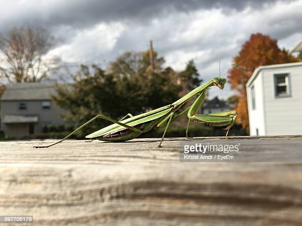 Close-Up Of Praying Mantis On Table Against Sky
