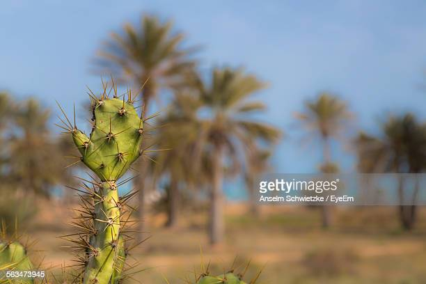 Close-Up Of Prickly Pear Cactus On Field