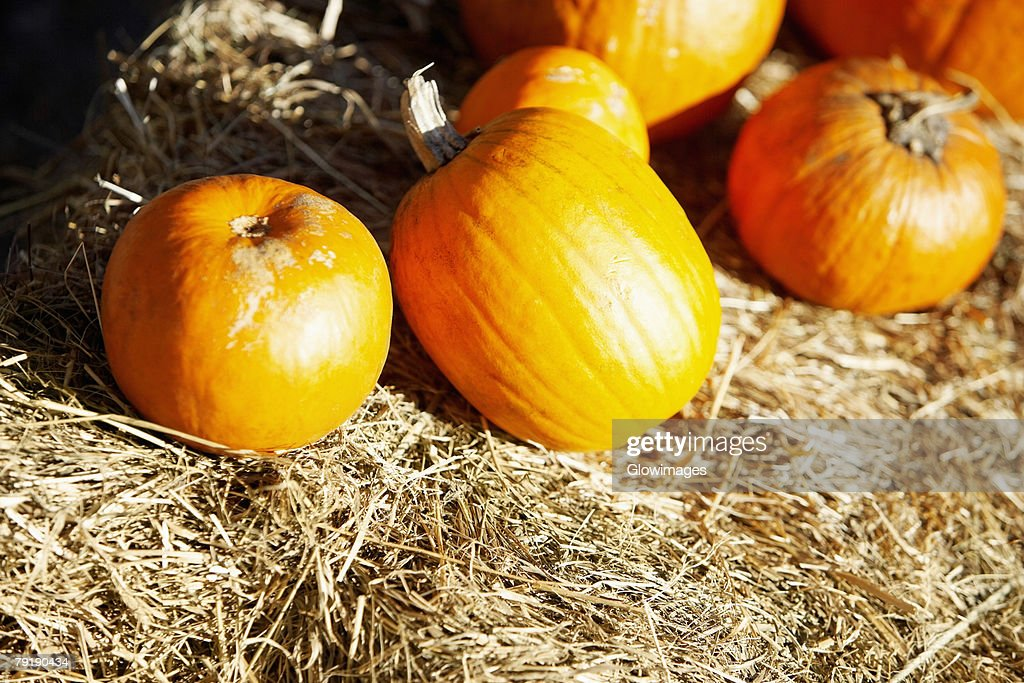 Close-up of pumpkins on grass, New York City, New York State, USA : Foto de stock