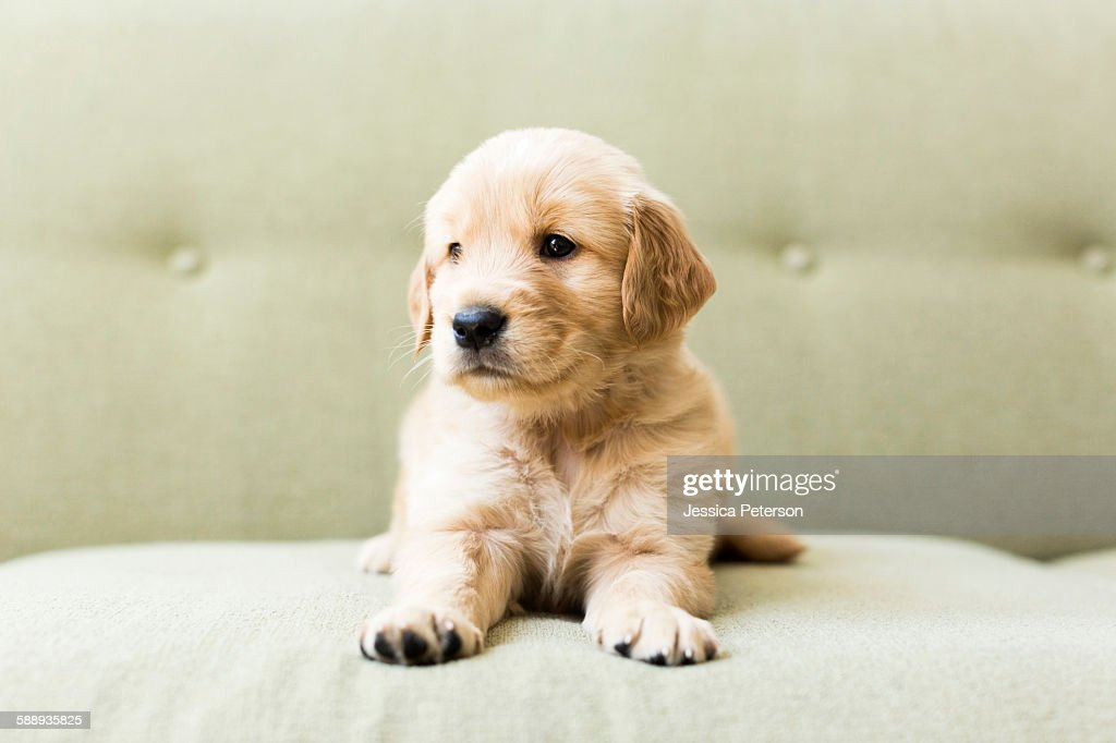 Close-up of puppy lying on sofa