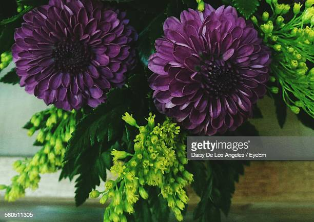 Close-Up Of Purple Dahlia Flowers In Vase