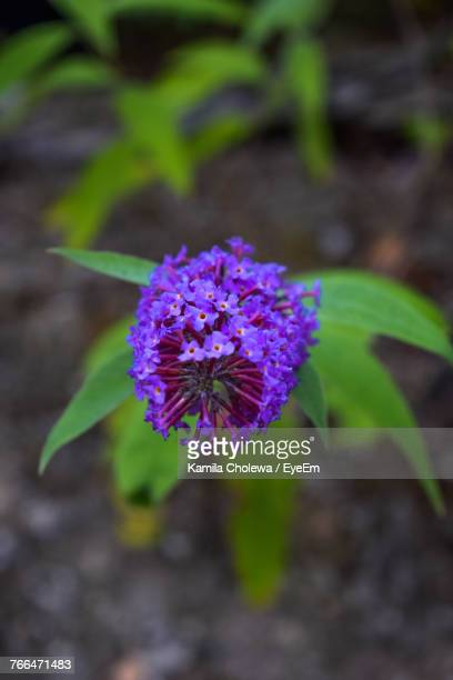 Close-Up Of Purple Flower Blooming Outdoors