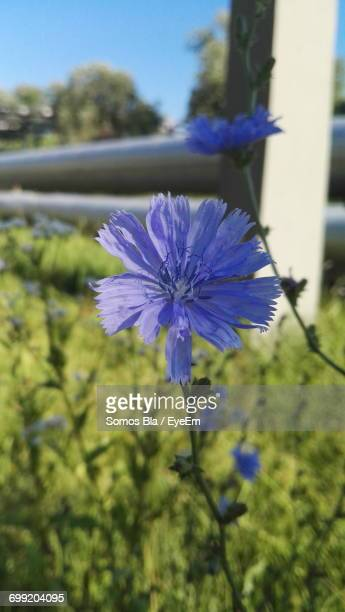 Close-Up Of Purple Flowers Blooming Against Blue Sky