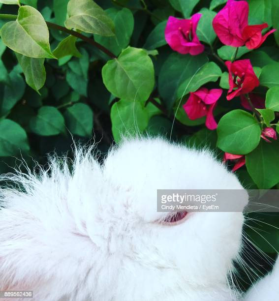Close-Up Of Rabbit By Plants
