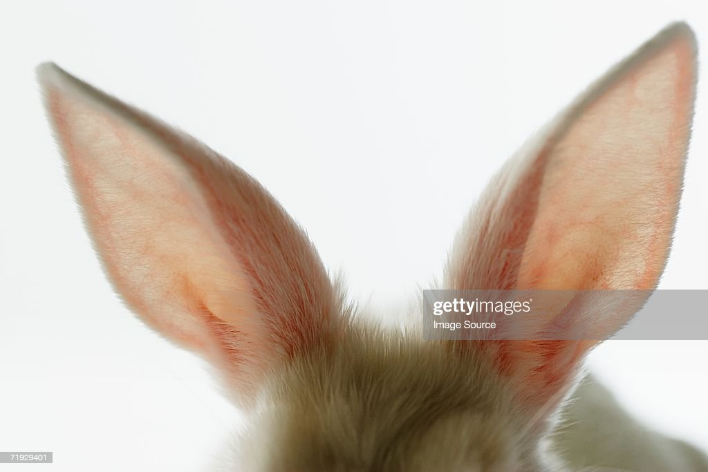Close-up of rabbit ears
