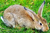 Close-Up Of Rabbit On Grassy Field