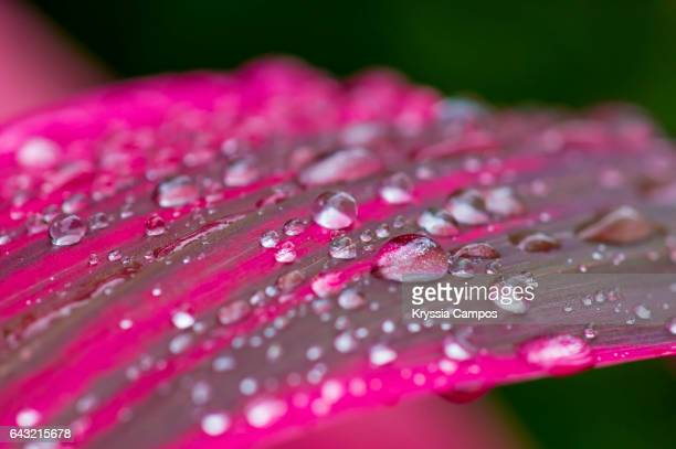 Close-Up Of Raindrops On Leaves at the Rainforest