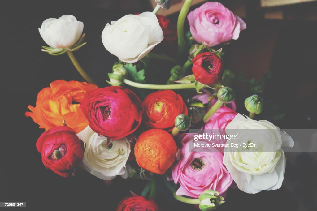 Closeup Of Ranunculus Flowers Bouquet Stock Photo | Getty Images