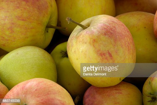 Close-up of red and green apples, Cowichan Valley, British Columbia, Canada