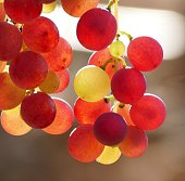 Close-Up Of Red Grapes Hanging