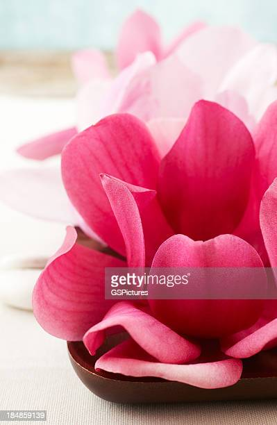 Closeup of red magnolia flowers on wooden bowl.