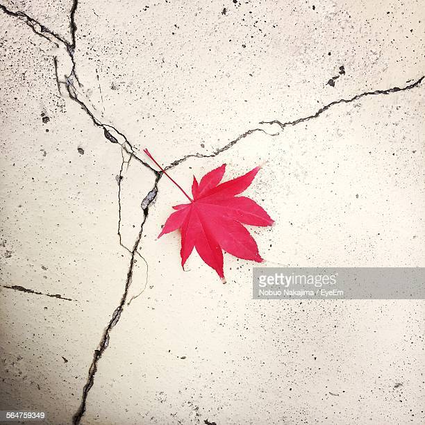 Close-Up Of Red Maple Leaf On Cracked Wall