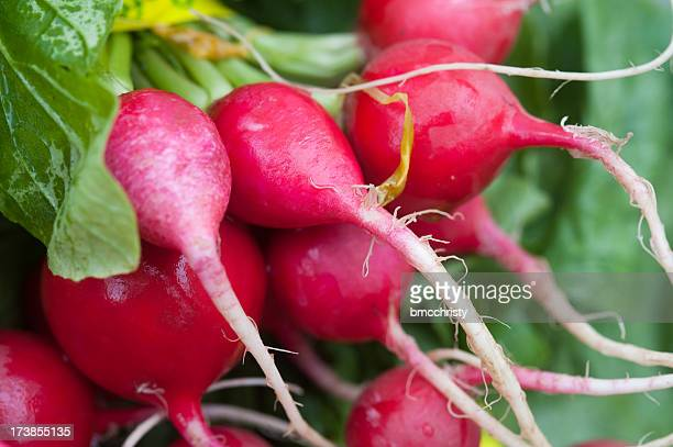 Close-up of red radishes with green leaves
