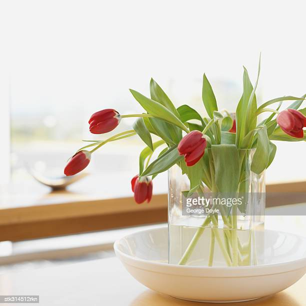close-up of red tulips in a vase