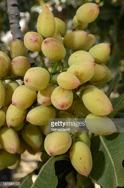Trees With Seed Pods Stock Photos and Pictures | Getty Images