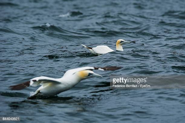 Close-Up Of Sea Birds On Water Surface