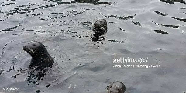 Close-up of sea lion swimming in sea