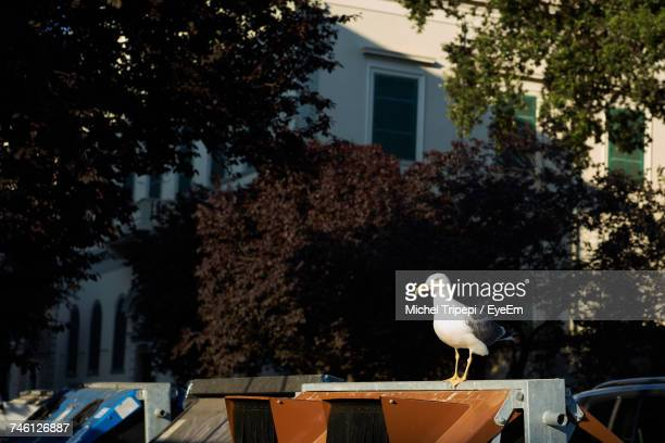 Close-Up Of Seagull Standing On Retaining Wall