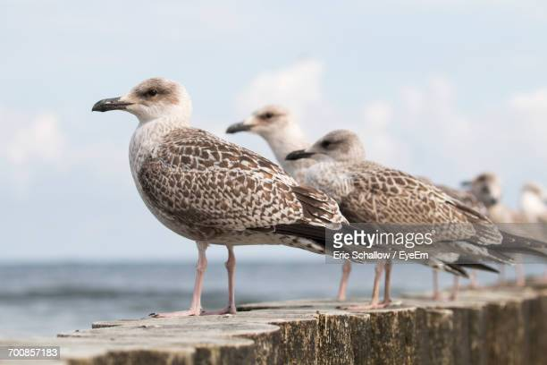 Close-Up Of Seagulls Perching By Beach