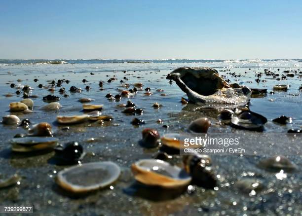 Close-Up Of Shells On Beach Against Sky
