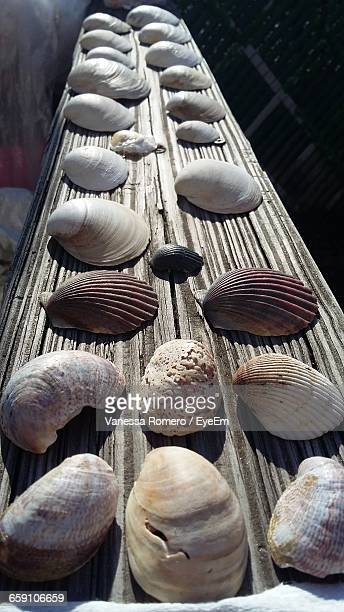 Close-Up Of Shells On Table