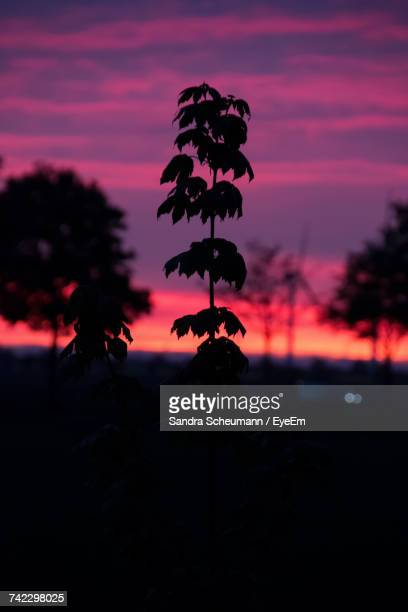 Close-Up Of Silhouette Plant Against Sky At Sunset