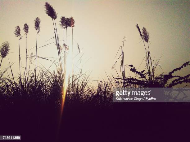 Close-Up Of Silhouette Plants Against Sky During Sunset