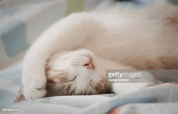 Close-up of sleeping cat