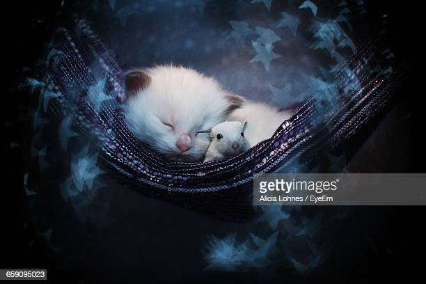 Close-Up Of Sleeping Kitten With Mouse