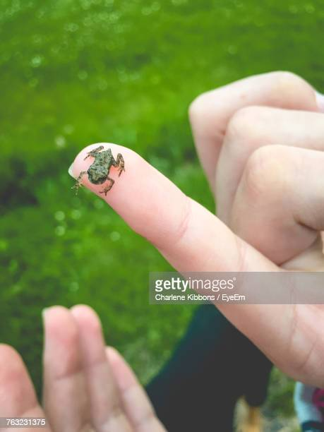Close-Up Of Small Frog On Finger