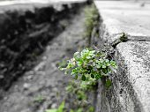 Close-Up Of Small Plant Growing On Retaining Wall
