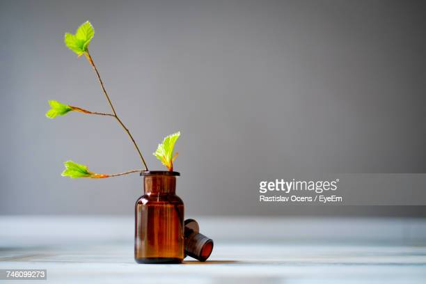 Close-Up Of Small Plant In Bottle On Table