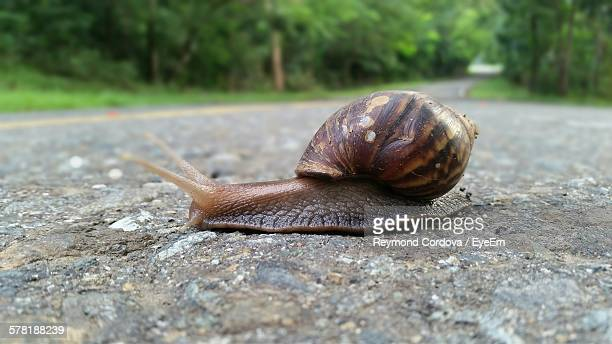 Close-Up Of Snail Crawling On Road