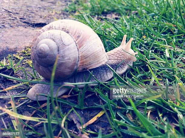 Close-Up Of Snail In Grass