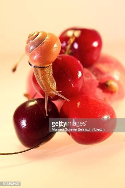 Close-Up of Snail On Cherries Over White Background