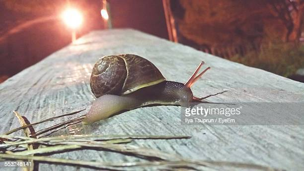 Close-Up Of Snail On Wooden Plank At Night