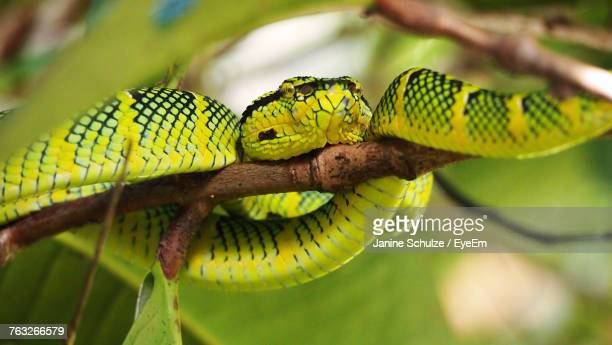 Close-Up Of Snake On Branch