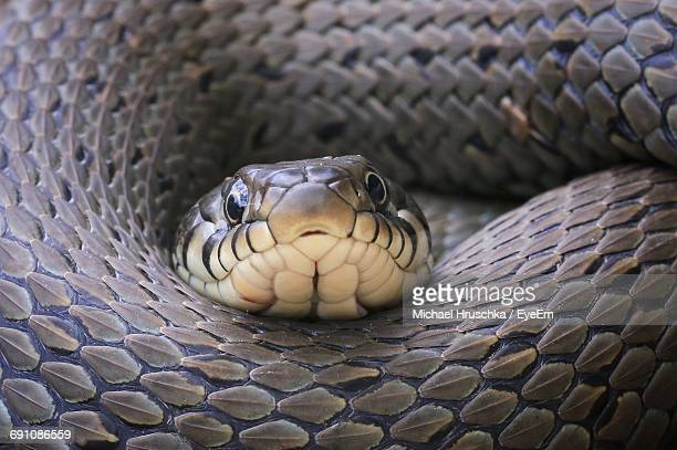 Close-Up Of Snake