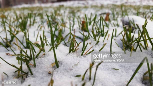 Close-up of snow on grass field