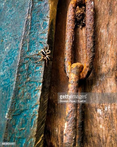 Close-Up Of Spider By Rusty Metallic Chain On Wood