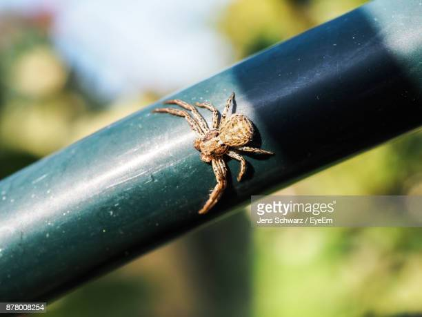 Close-Up Of Spider On Pipe