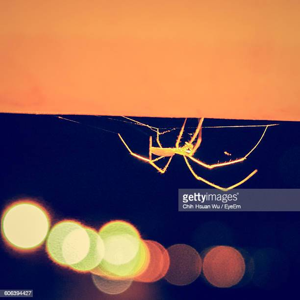 Close-Up Of Spider On Wall At Night
