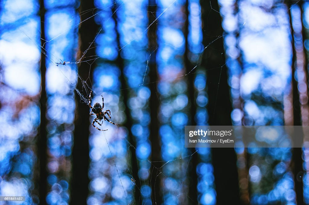 Close-Up Of Spider On Web Against Trees In Forest