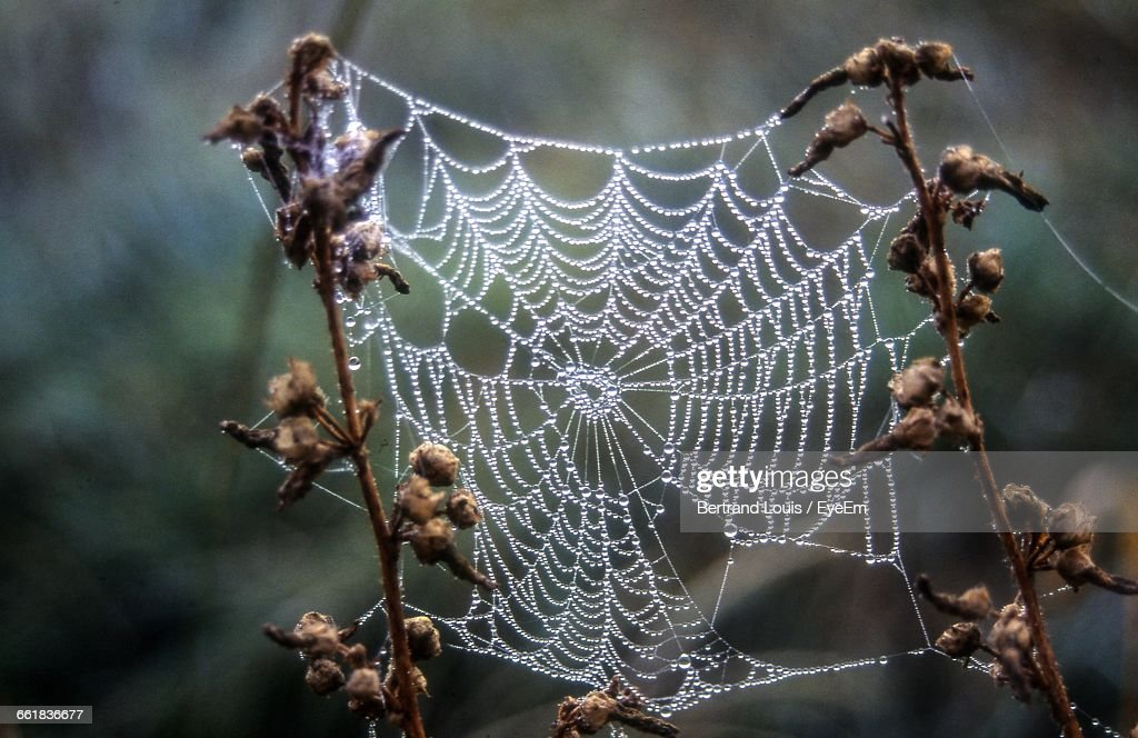 Close-Up Of Spider Web Between Twigs