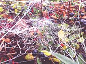 Close-Up Of Spider Web On Berry Plant