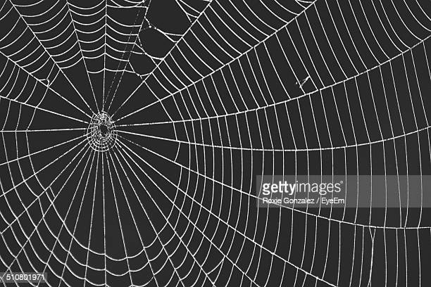 Close-up of spider web over black background