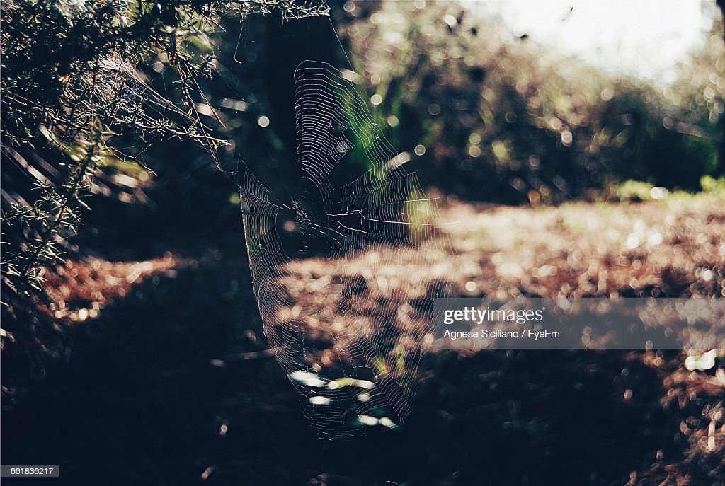 Close-Up Of Spider Web Over Field