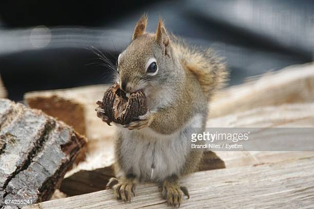 Close-Up Of Squirrel Eating Walnut On Wood
