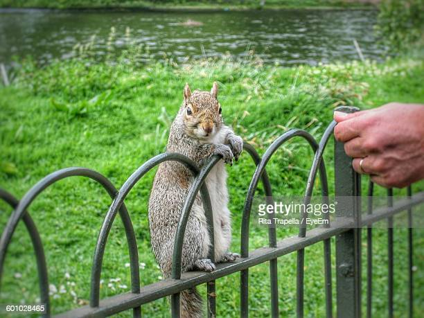 Close-Up Of Squirrel Standing On Railing Against Grass