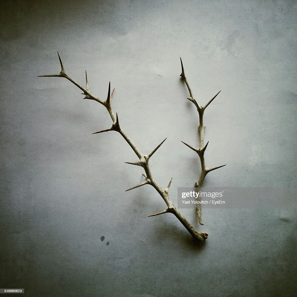 Close-Up Of Stem With Thorns Over White Background